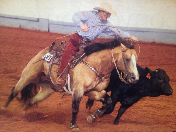 Wool Saddle Pads in Marietta OK